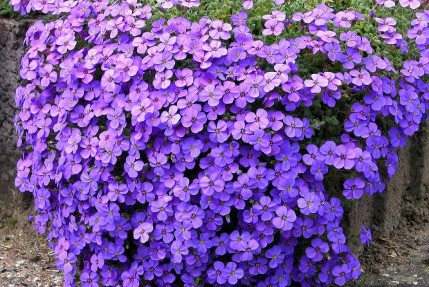 Selecting Plants For A Rock Garden Space For Life