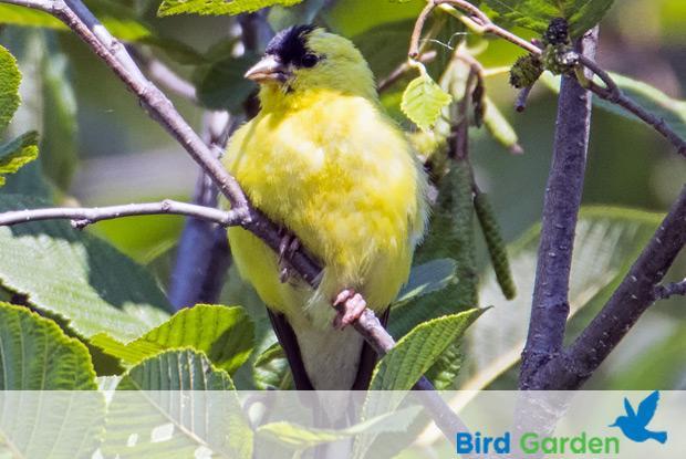 Bird garden with logo