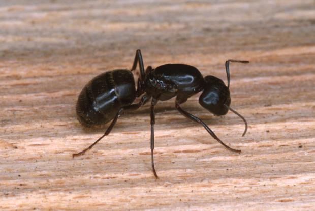 Résultats de recherche d'images pour «photo fourmis»
