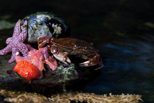 Le Biodôme est un milieu d'éducation à la biodiversité.