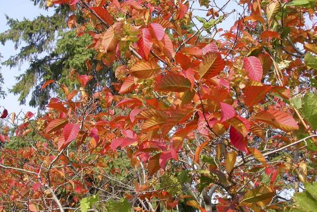 38e0f68c7b0 Photo  Jardin botanique de Montréal (Robert Mineau)