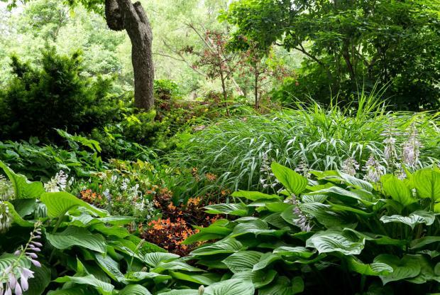 Vue générale du jardin du sous-bois