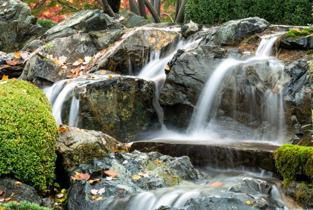 Jardin Japonais Espace Pour La Vie