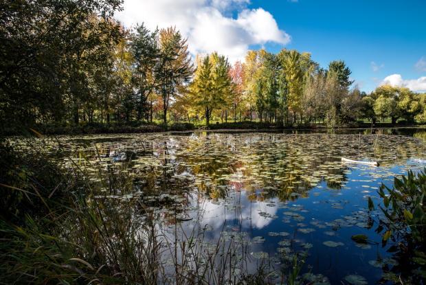 Couleurs d'automne au Jardin botanique