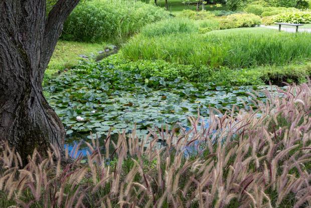 Ruisseau au Jardin japonais