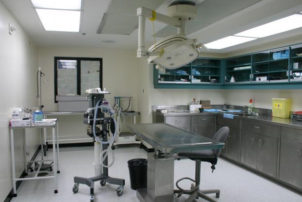 The veterinary clinic.
