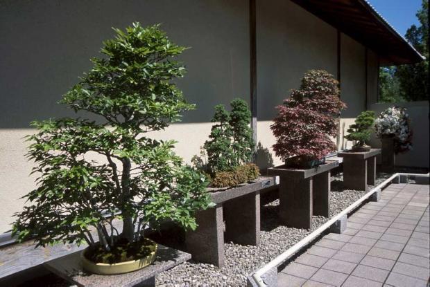 Cour des bonsaïs