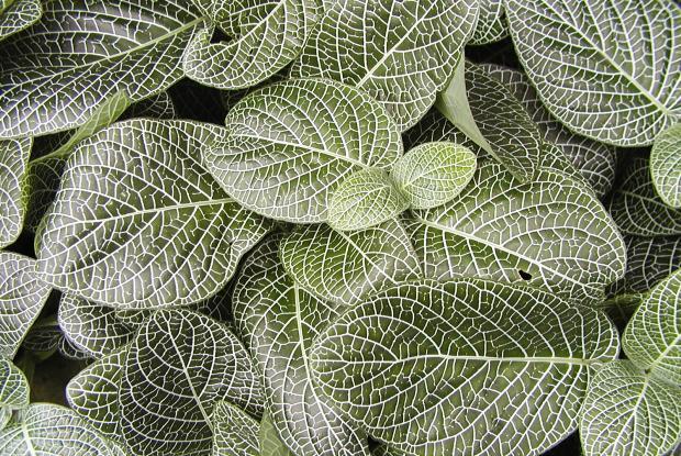 Pour Plantes D'hiver La D'intérieurEspace Soins De Vos Vie 1JTulKc3F