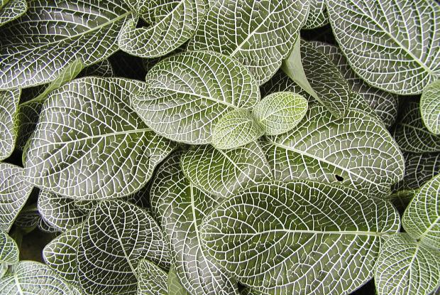 Caring For Indoor Plants In The Wintertime Space For Life