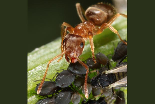 Ant, Québec, Canada.