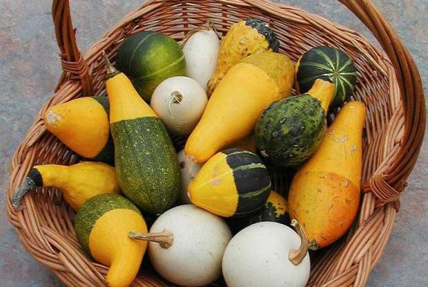 Basket full of small decorative gourds