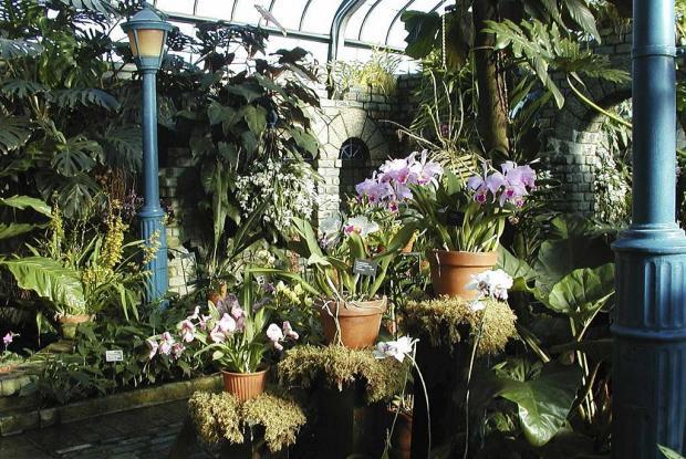 Serre des orchidées et aracées