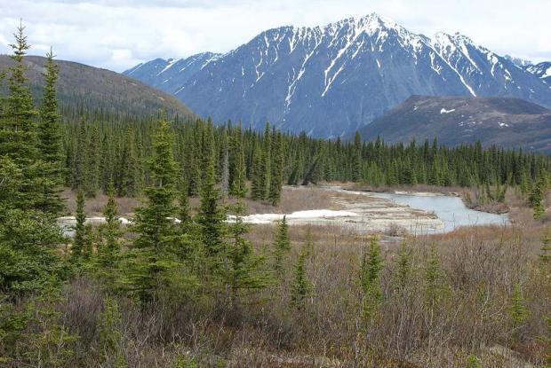 Resultado de imagen para tundra taiga