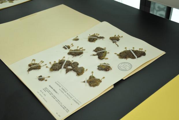 Marie-Victorin Herbarium.