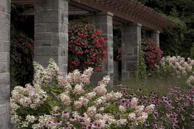 Jardin des plantes vivaces