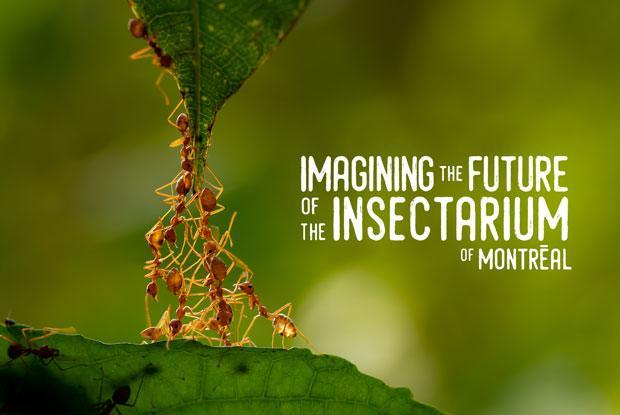 Imagining the Insectarium 2021–2025