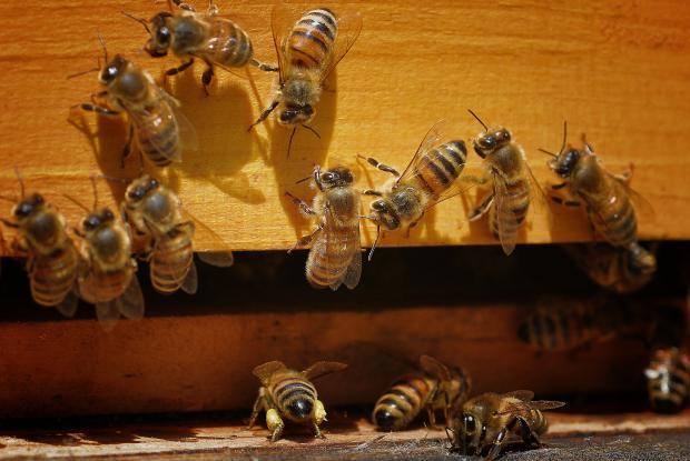 Entrée de la ruche