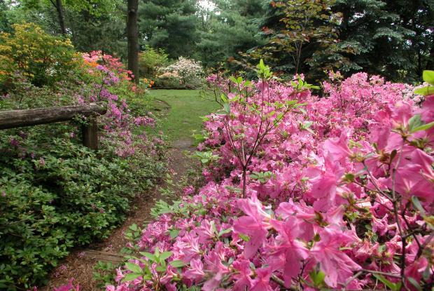 Leslie Hancock Garden