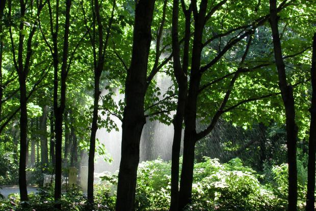 La forêt de feuillus.