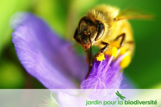 Jardin pour la biodiversité avec logo