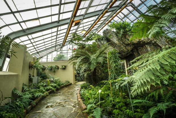 General view of the Ferns Greenhouse