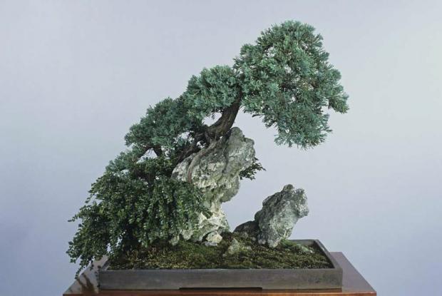 bonsas dextrieur versus dintrieur