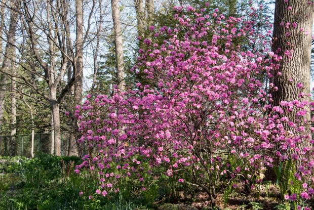 Jardin du sous-bois au printemps