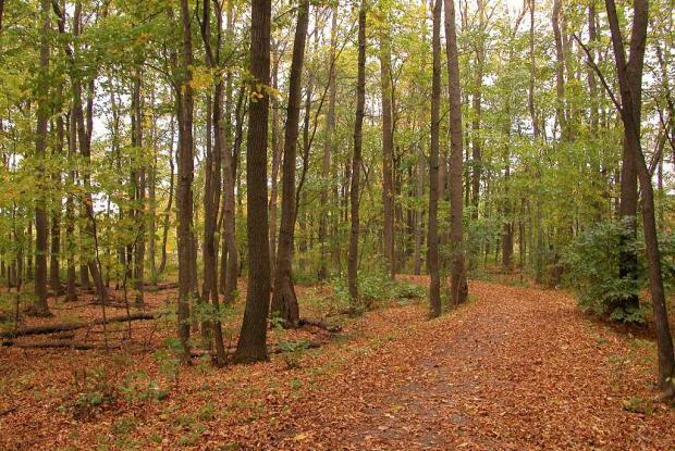 Ash Woodland