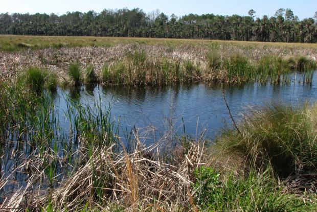 Filtering marsh.