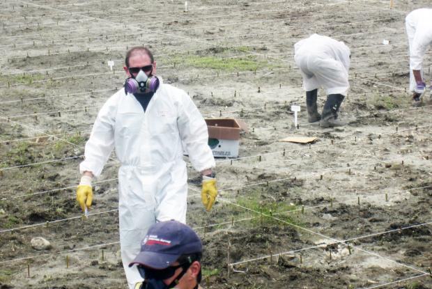Implementation of an experiment involving the decontamination of soils containing PAHs and other hydrocarbons in the spring of 2011.
