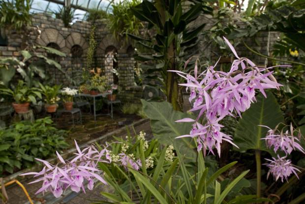 Serre des orchidées et des aracées | Espace pour la vie