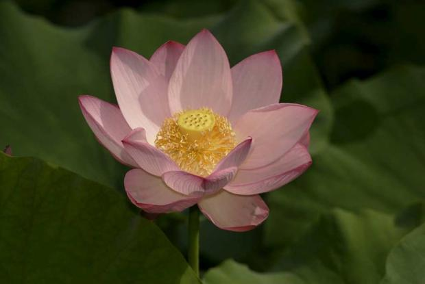 Lotus Space For Life