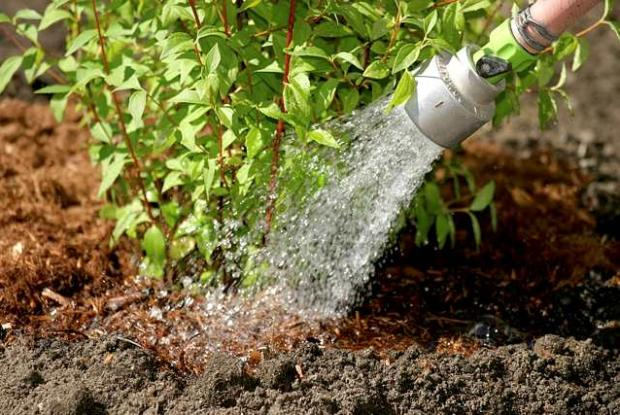Horticultural techniques - Planting shrubs