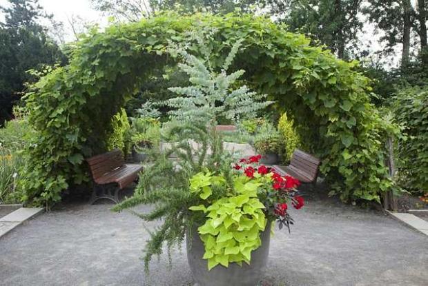 Economic Plants Garden