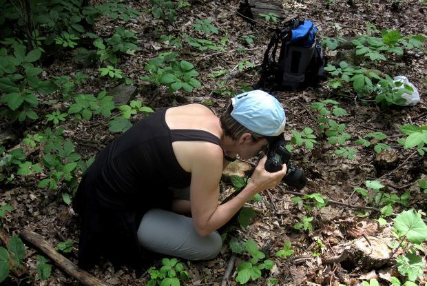 Photographing arthropods.