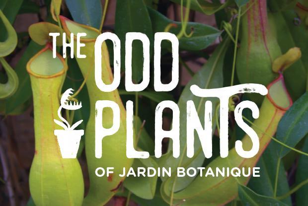 The Jardin botanique's odd plants