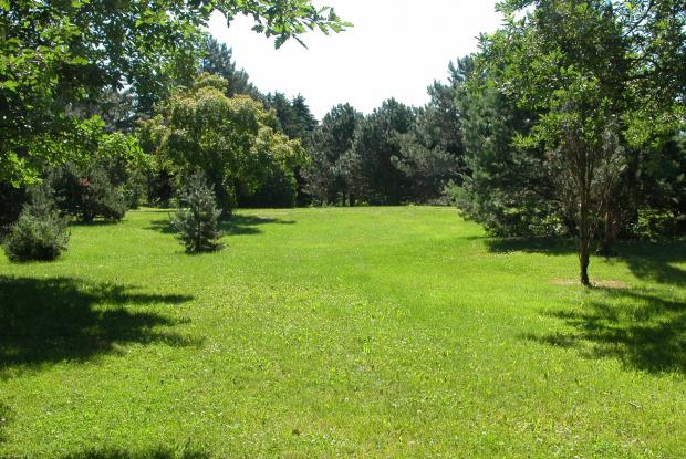 Lawn - Arboretum