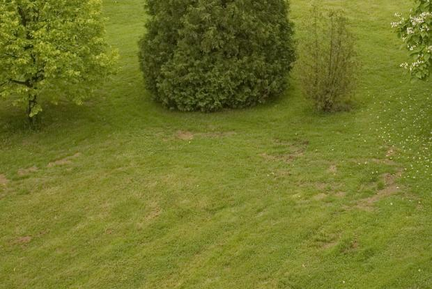 Lawn with bare patches