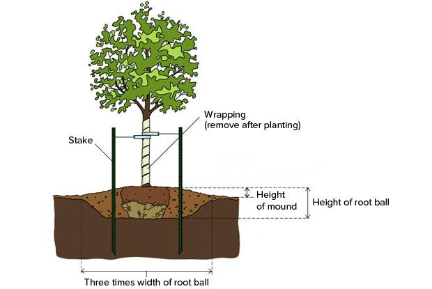 Raised planting