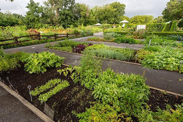 Des jardins potagers au Jardin botanique de Montréal