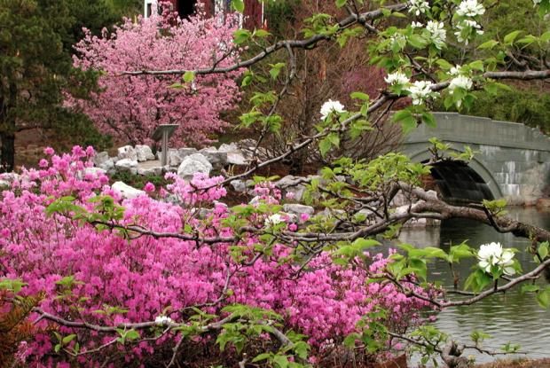 Spring blooms in the Chinese Garden