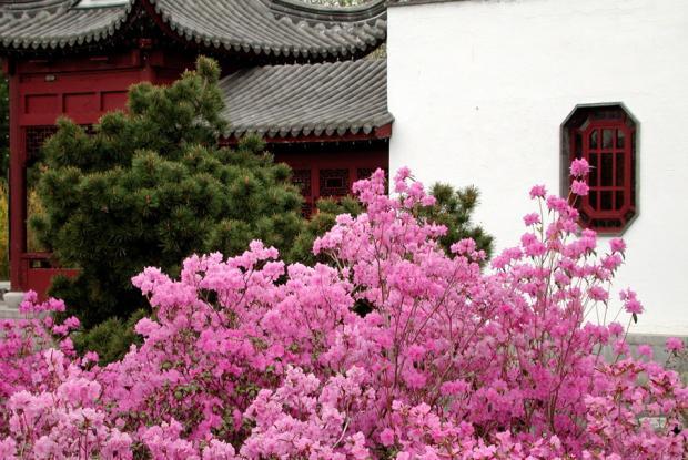 Floraison printanière au Jardin de Chine.