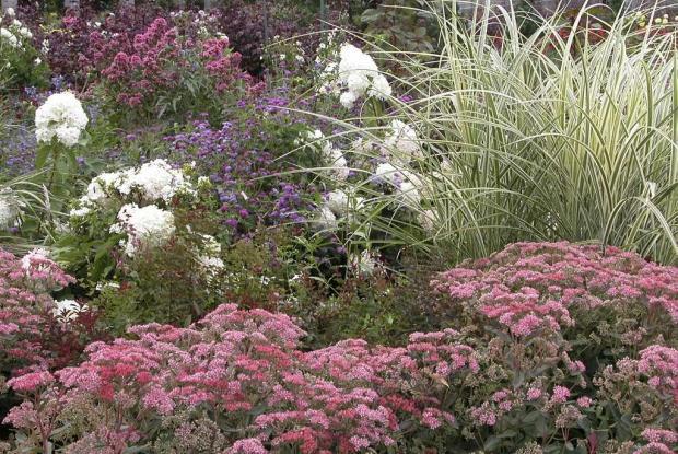 Jardin des plantes vivaces | Espace pour la vie
