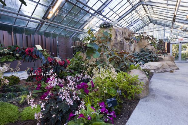 Actions au Jardin Botanique | Espace pour la vie