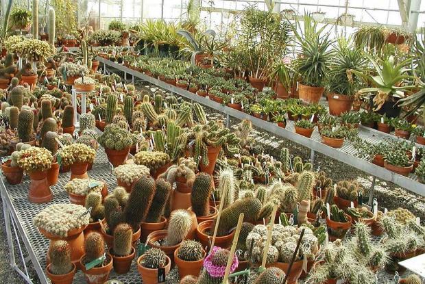 Service greenhouse.