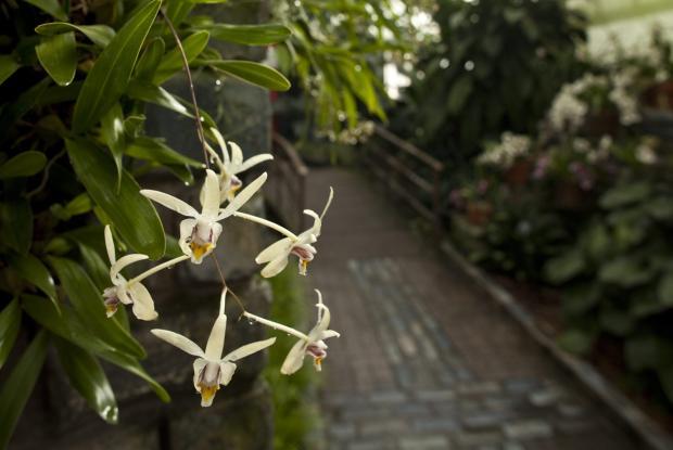 Serre des orchidées et des aracées.