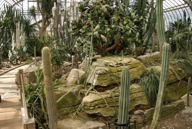La collection des cactacées à la Serre de régions arides.