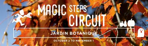 Magic Steps Circuit