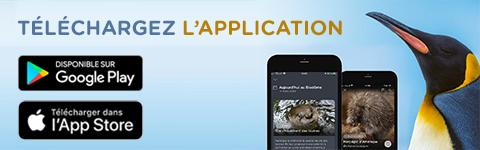 Téléchargez l'application -  mobile