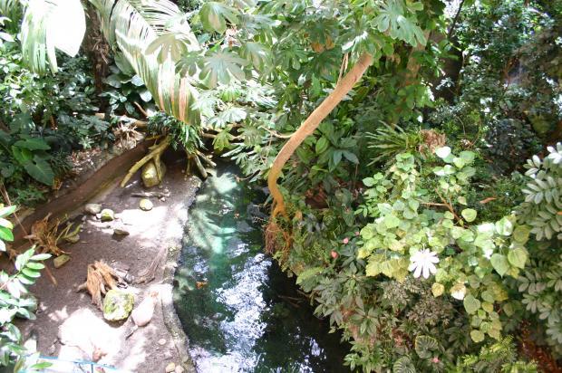 Paysage de la Forêt tropicale humide.